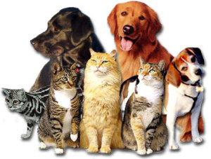 cats_n_dogs