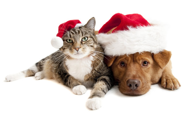 dog-cat-santa-hat